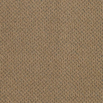 Jazz Pointe - Safari Plains From Mohawk Carpet
