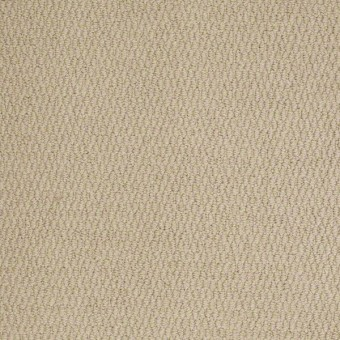 XV861 - Intellectual From Shaw Carpet