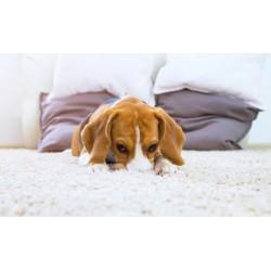 LCT-Puppy.jpg